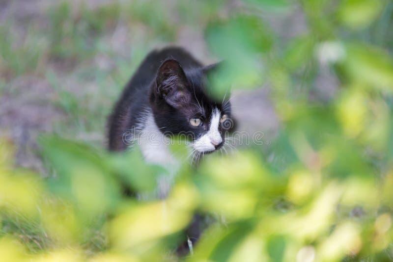 Il gatto sta vagando attraverso i cespugli immagini stock