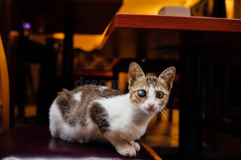 Il gatto sui ciechi tricolori ibridi senza tetto della sedia della via un occhio Guarda nel telaio mystic fotografia stock libera da diritti
