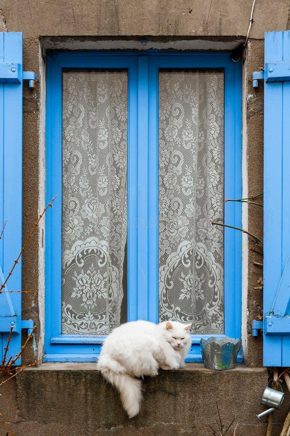 Il Gatto Sulla Finestra Blu Immagine Stock Immagine Di