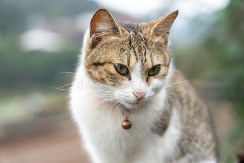 Il gatto sveglio del ritratto che si siede davanti alla casa ? un animale domestico sveglio e le buone abitudini immagine stock libera da diritti