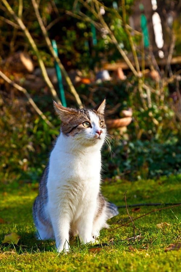 Il gatto sveglio gode del giardino fotografia stock libera da diritti