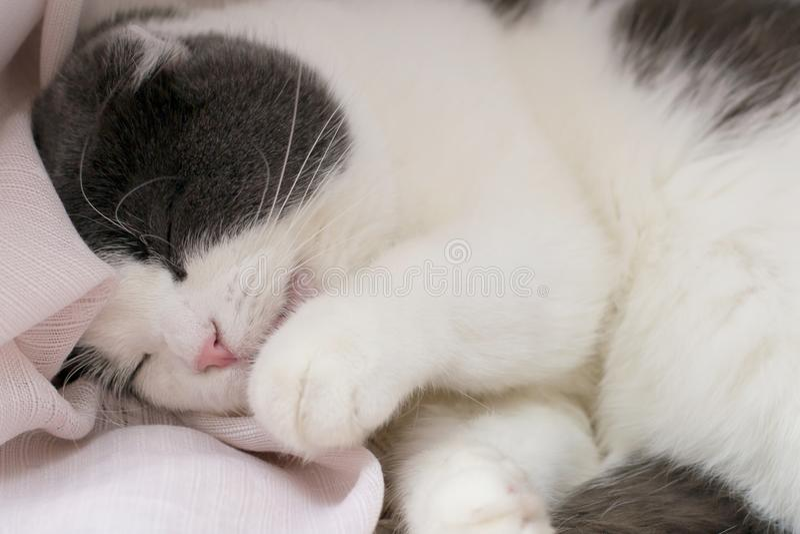 Il gatto sveglio lanuginoso si trova sul davanzale, lecca la sua zampa e lava il suo corpo immagine stock libera da diritti