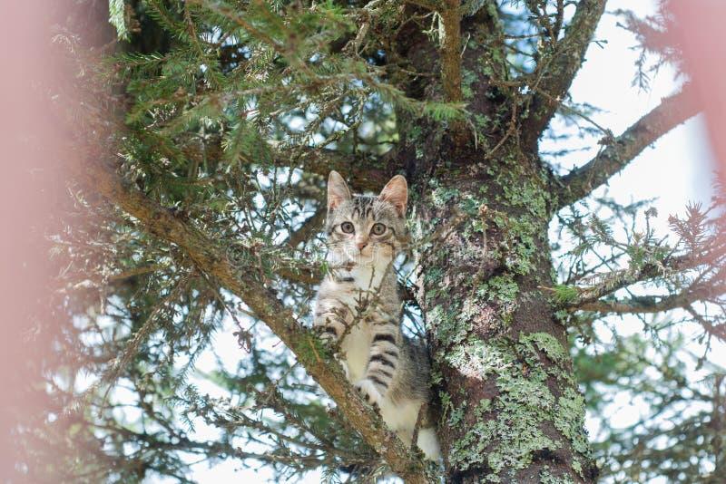 Il gatto sveglio sta trovandosi sull'albero, piccolo gattino su un ramo, animali domestici svegli ha tre colori su un fondo verde fotografia stock libera da diritti