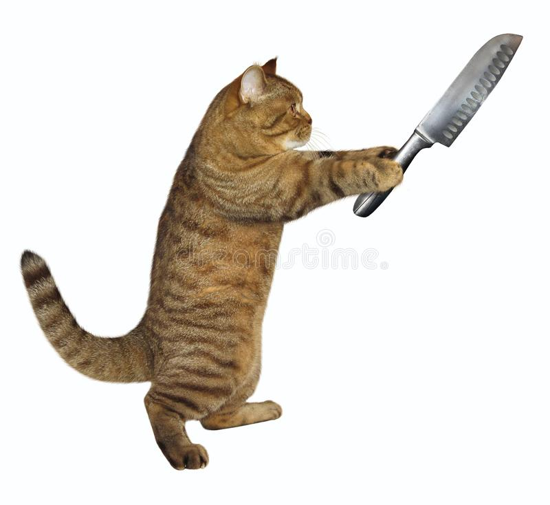 Il gatto tiene un grande coltello fotografia stock libera da diritti