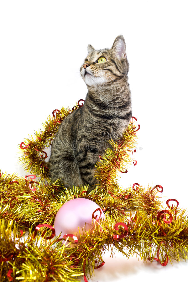 Download Il Gatto In Un Sembrare Della Canutiglia Lasciato Immagine Stock - Immagine di amicizia, trumpery: 7317115