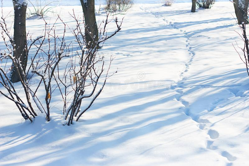 il gelo della neve dell'inverno va alla deriva le tracce sul percorso della neve nel parco fra i cespugli e gli alberi immagini stock