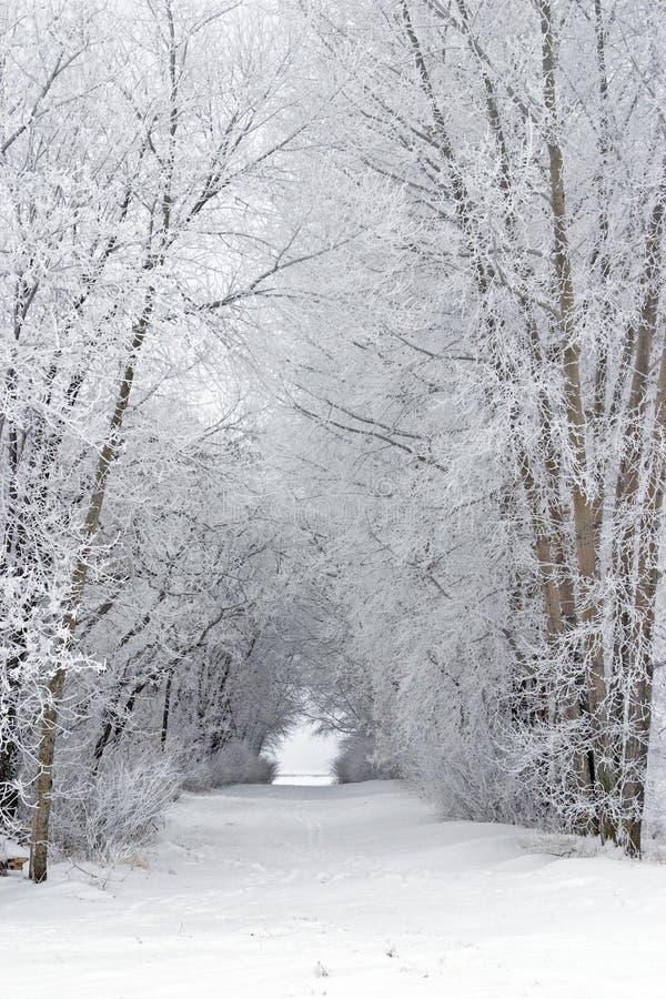Il gelo dello Snowy ha coperto il vicolo riempito albero in paese fotografie stock