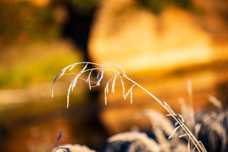il gelo ha coperto le foglie dell'albero e dell'erba alla luce soleggiata di mattina dell'inverno fotografia stock libera da diritti