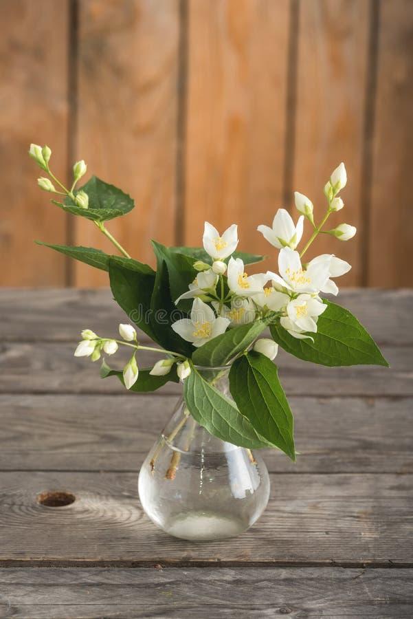 Il gelsomino bianco fiorisce i ramoscelli in un piccolo vaso fotografia stock