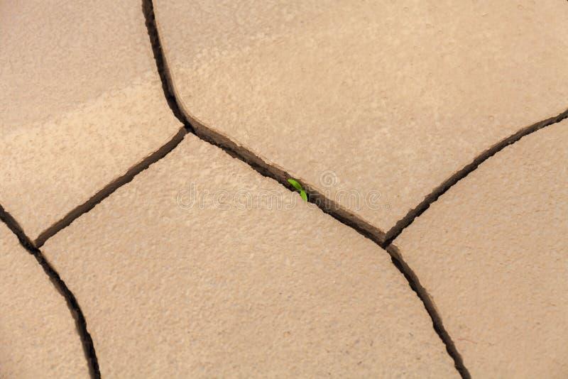 Il germoglio di verde quasi invisibile di una pianta fa il modo con un asciutto, incrinato, completamente Concetto: indossi il `  fotografie stock libere da diritti