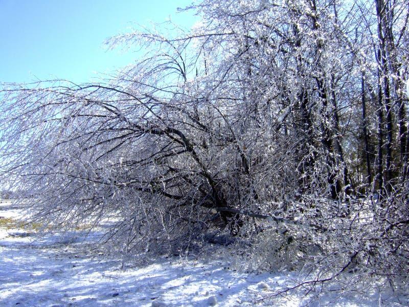 Il ghiaccio appesantisce gli alberi per piegare immagini stock libere da diritti