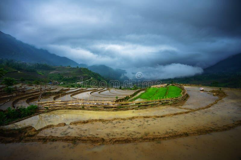 Il giacimento a terrazze del riso nella stagione dell'acqua, il tempo prima di cominciare coltiva il riso, con le nuvole nere che fotografia stock libera da diritti
