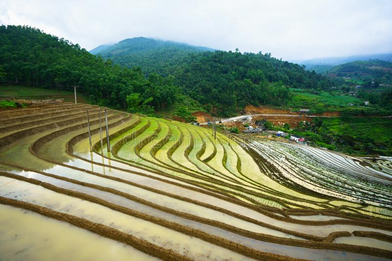Il giacimento a terrazze del riso nella stagione dell'acqua, il tempo prima di cominciare coltiva il riso in Y Ty, la provincia d immagini stock libere da diritti