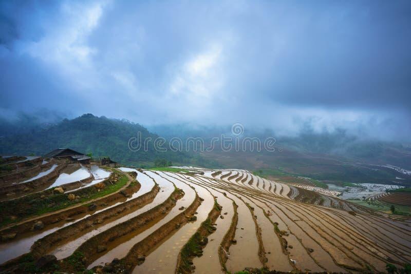 Il giacimento a terrazze del riso nella stagione dell'acqua, il tempo prima di cominciare coltiva il riso in Y Ty, la provincia d immagine stock