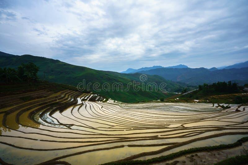 Il giacimento a terrazze del riso nella stagione dell'acqua, il tempo prima di cominciare coltiva il riso in Y Ty, la provincia d fotografia stock libera da diritti