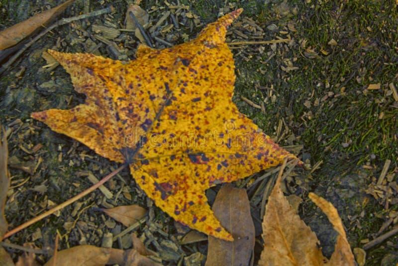Il giallo, arancio e Brown della caduta immagini stock libere da diritti