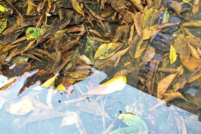 Il giallo caduto lascia in pozza con la riflessione del cielo di autunno fotografia stock