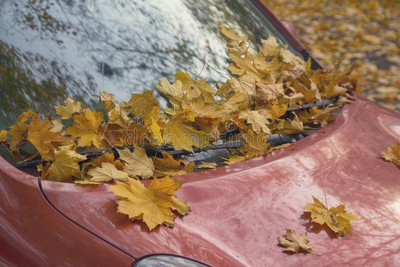 Il giallo caduto va sul vetro e sul cappuccio dell'automobile immagini stock libere da diritti