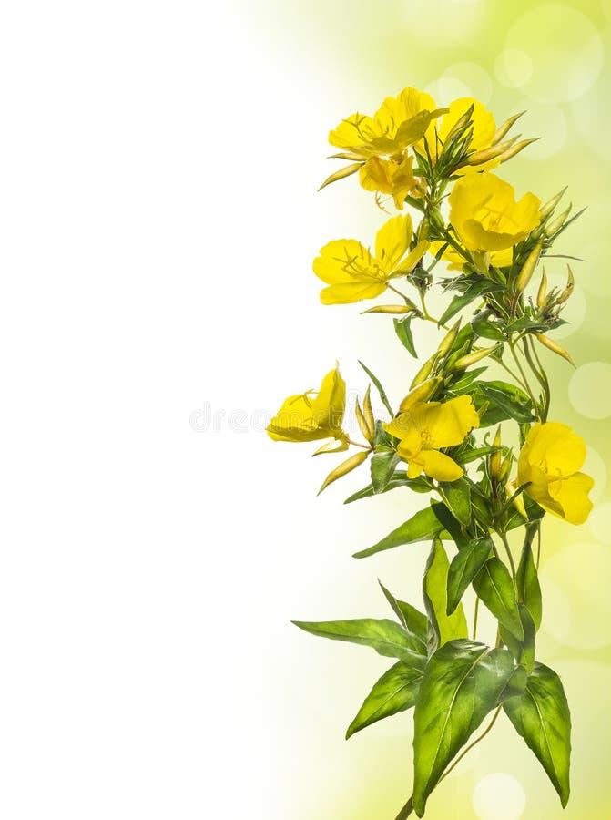 Il giallo fiorisce il confine floreale fotografie stock