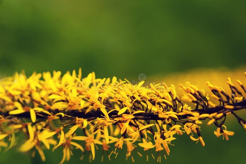 Il giallo fiorisce orizzontalmente il primo piano su un fondo verde immagini stock libere da diritti