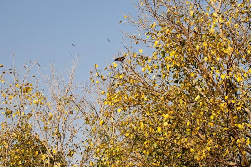 Il giallo ha colorato le foglie in autunno immagini stock libere da diritti
