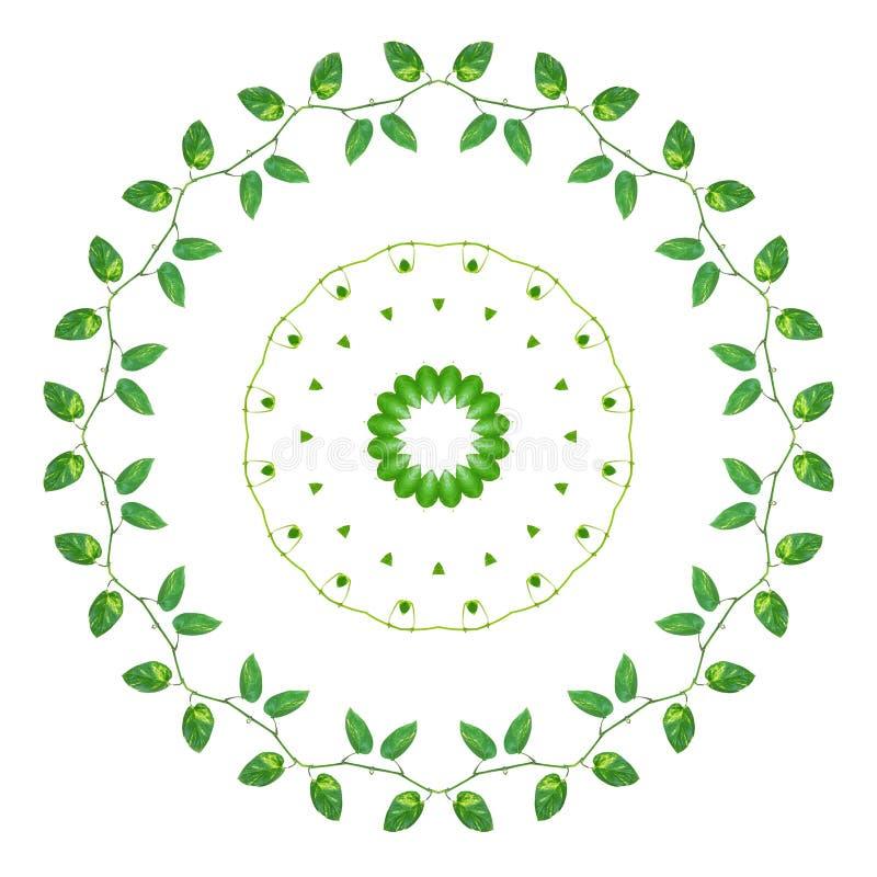 Il giallo verde lascia le viti di devil& x27; edera di s o pothos dorato con effetto del caleidoscopio illustrazione vettoriale