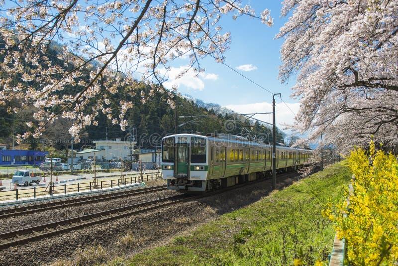 Il Giappone - 12 aprile 2016: Il treno Sendai di JUNIOR funziona lungo la ferrovia con mille Sakura Trees accanto al fiume di Shi fotografia stock libera da diritti