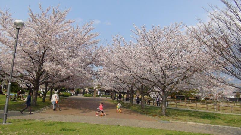 Il Giappone Cherry Blossom Tree fotografie stock libere da diritti