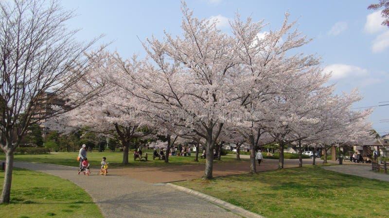 Il Giappone Cherry Blossom Tree fotografia stock libera da diritti