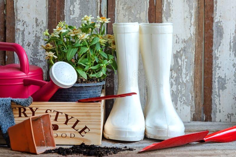 Il giardinaggio una pala riempita di strumento conservato in vaso dei fiori e del suolo nel tempo di molla di estate del giardino immagine stock
