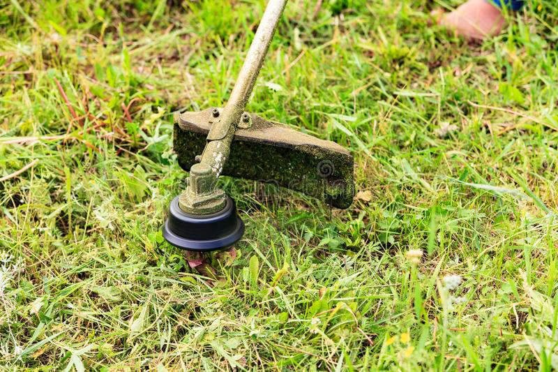 Il giardiniere che taglia erba con la falciatrice da giardino fotografia stock