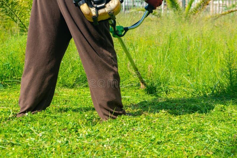 Il giardiniere che taglia erba dalla falciatrice da giardino, cura del prato inglese fotografia stock