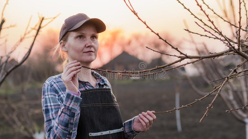 Il giardiniere della giovane donna esamina i rami di albero nel giardino fotografia stock libera da diritti