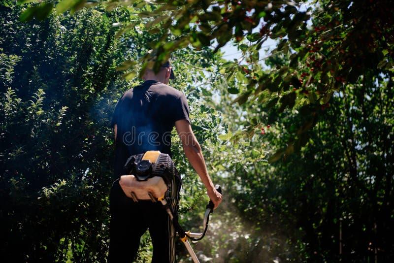Il giardiniere falcia l'erba con un regolatore nell'iarda di estate fotografie stock libere da diritti