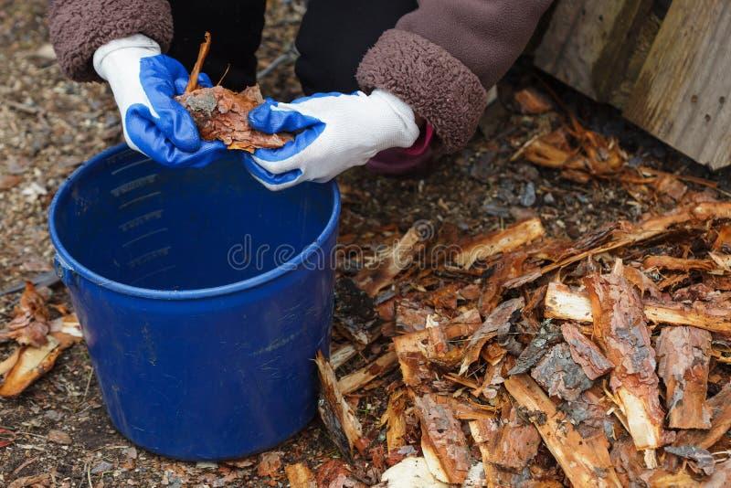 Il giardiniere taglia la corteccia del pino per la pacciamazione delle piante di pacciame fotografia stock libera da diritti