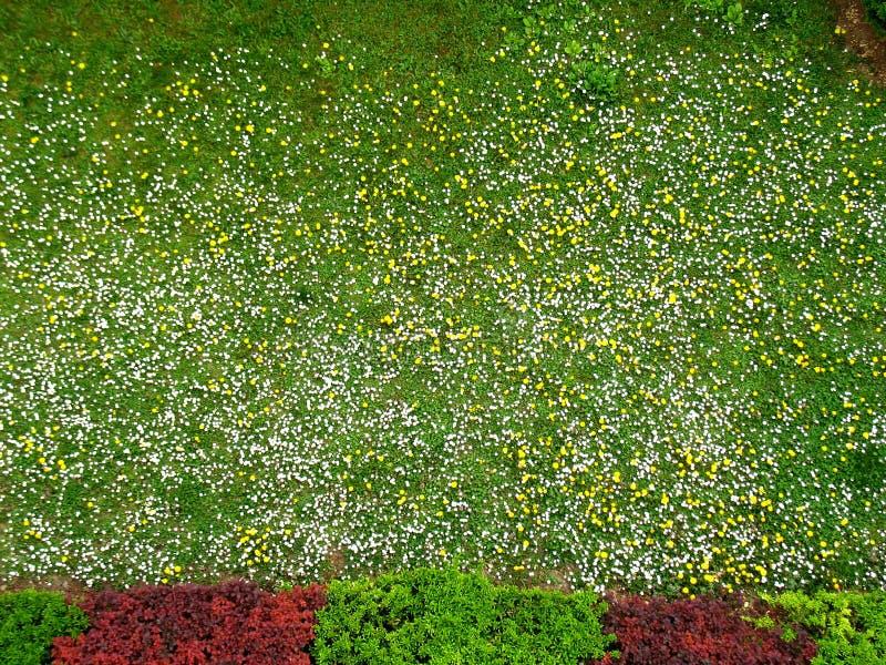 Il giardino immagine stock