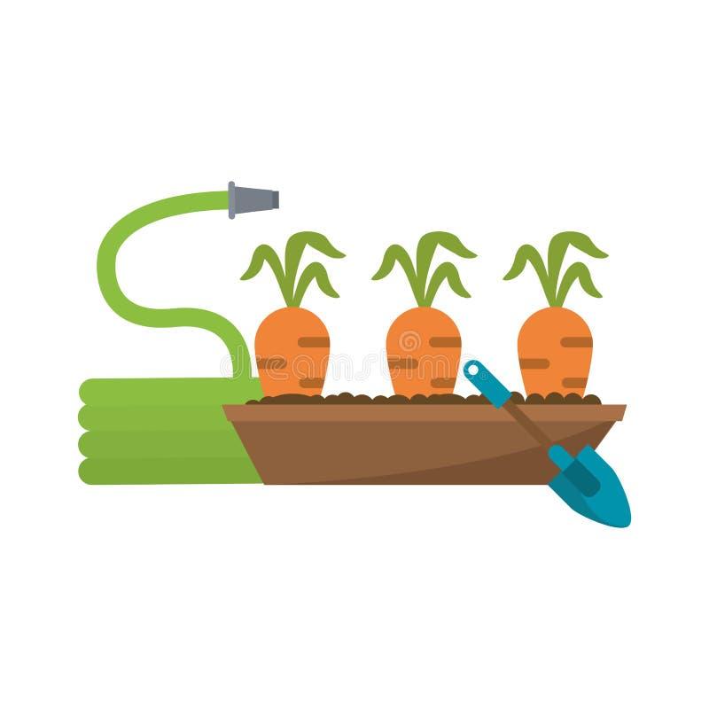 Il giardino con le carote raccoglie e annaffia illustrazione vettoriale
