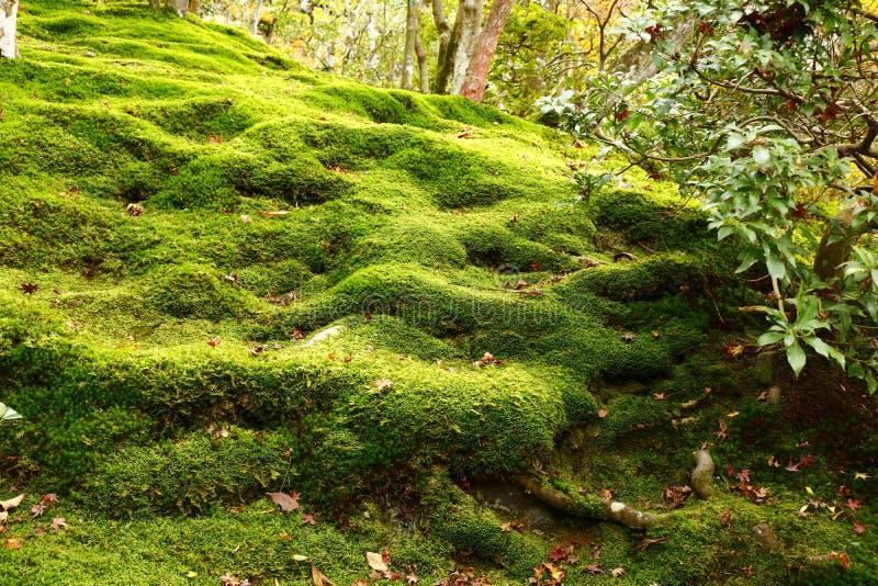 Il giardino del muschio di Ginkaku-ji fotografie stock libere da diritti
