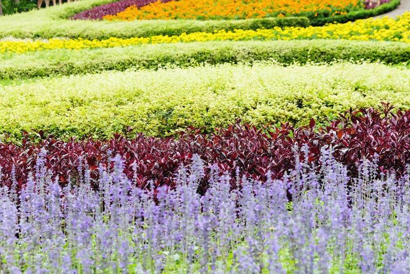 il giardino di fiore ha modific il terrenoare fotografie stock
