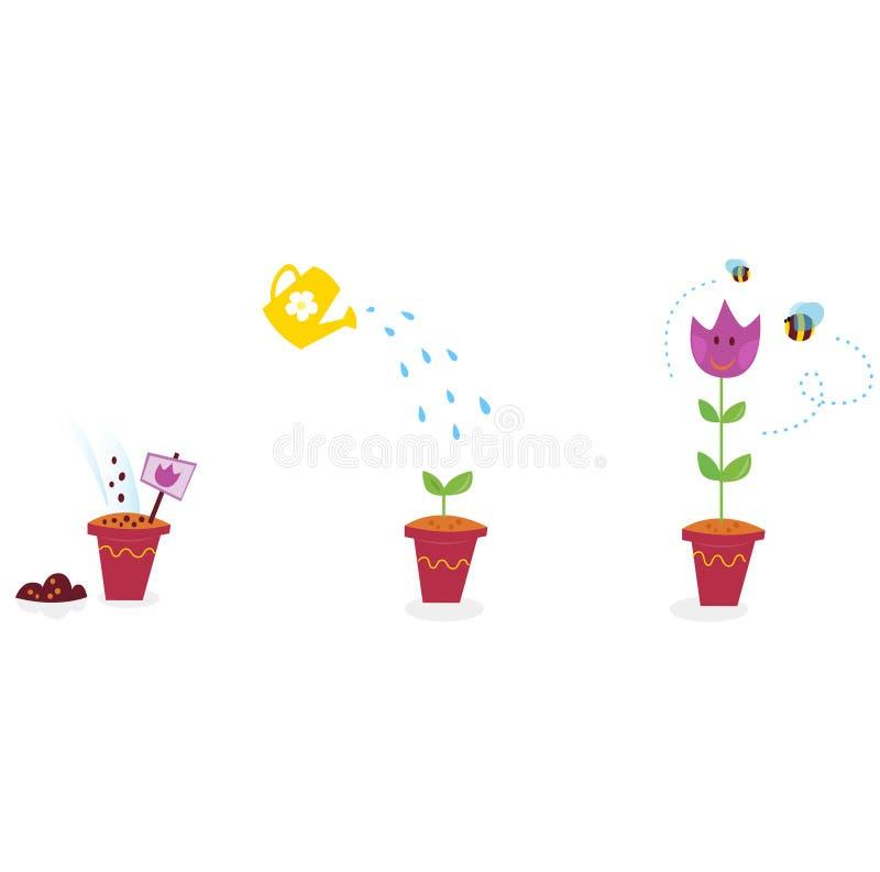 Il giardino fiorisce le fasi di sviluppo - tulipano royalty illustrazione gratis