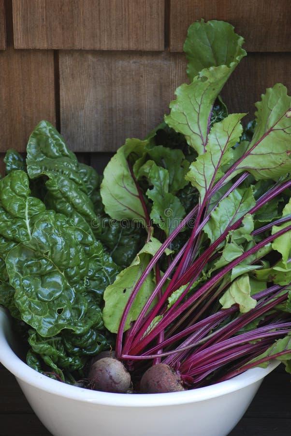 Il giardino ha raccolto le verdure organiche fresche immagine stock
