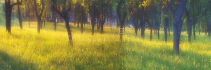 Il giardino magico fotografie stock libere da diritti