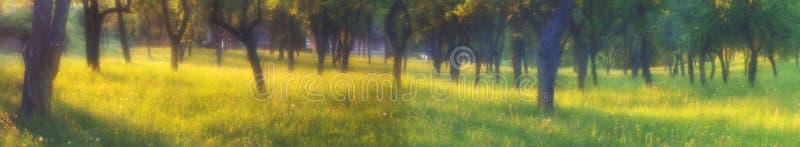 Il giardino magico fotografia stock libera da diritti