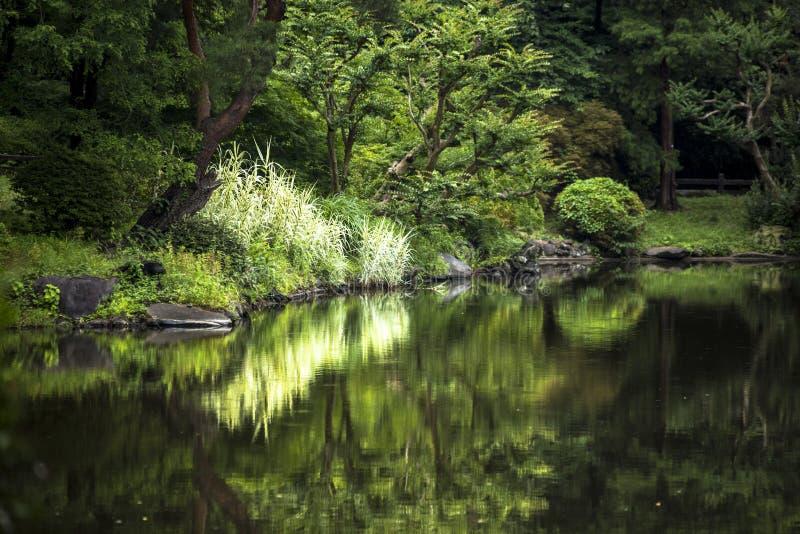 Il giardino nazionale di Shinjuku Gyoen è un grandi parco e giardino in Shinjuku e in Shibuya, Tokyo, Giappone immagini stock