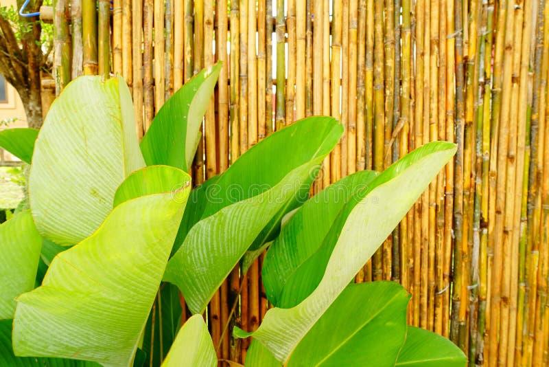 Il giardino usa di bambù per decorare immagini stock