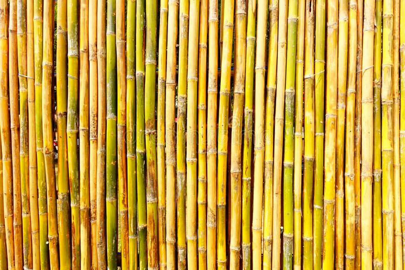 Il giardino usa di bambù per decorare fotografia stock