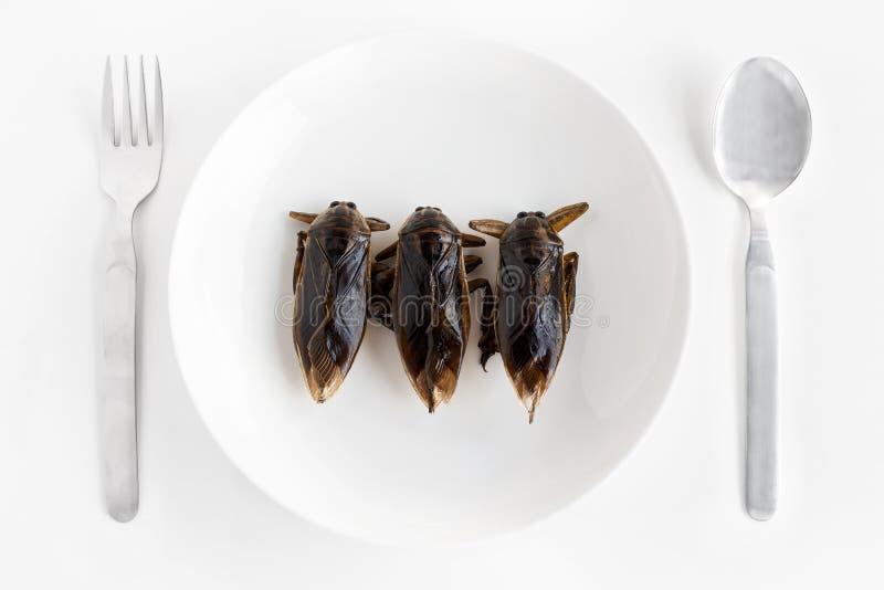 Il gigante Water Bug è un insetto commestibile per l'alimentazione in quanto alimenti Insetti che cucinano spuntini fritti su un  fotografie stock
