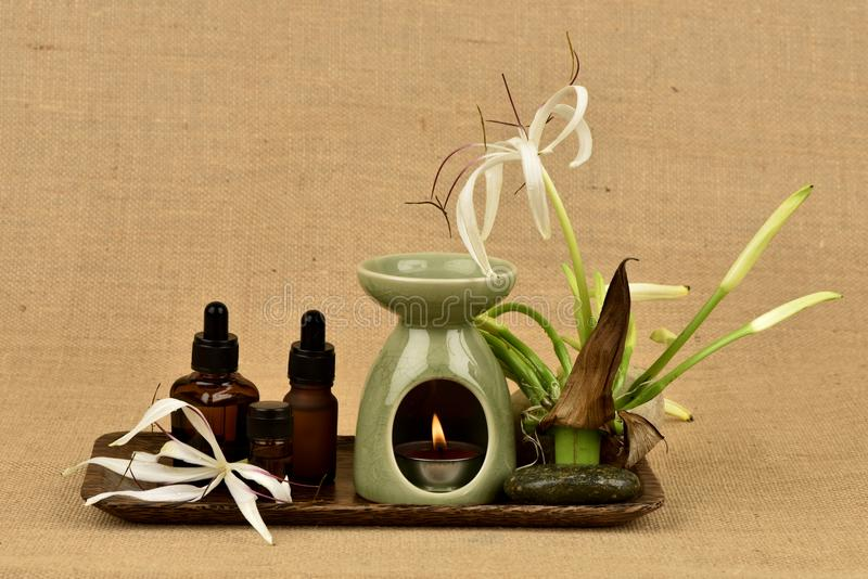 Il giglio di Crinum, i fiori e l'olio essenziale hanno proprietà medicinali immagine stock