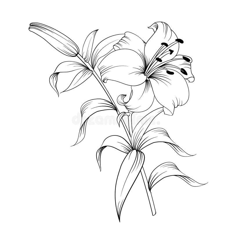 Il giglio di fioritura illustrazione vettoriale