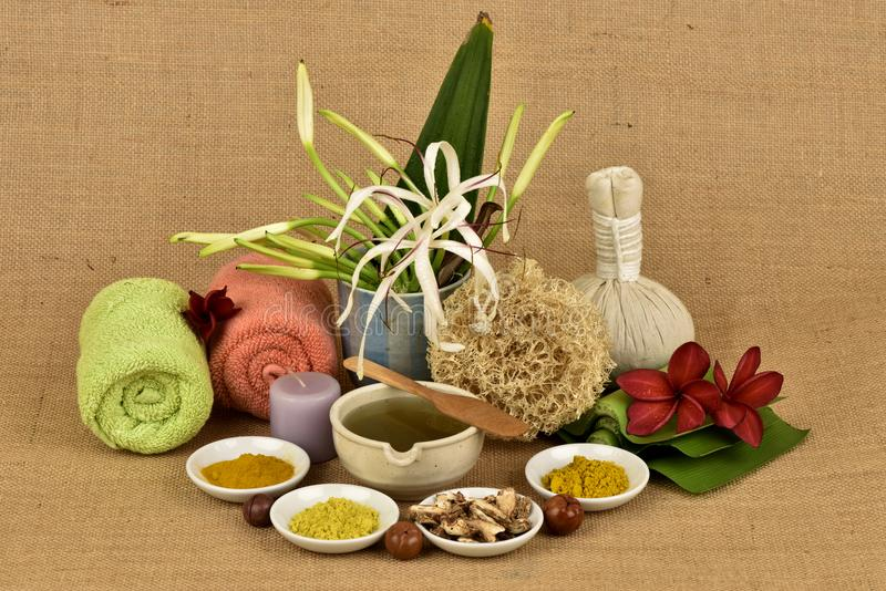 Il giglio, i fiori e le erbe di Crinum hanno proprietà medicinali immagine stock